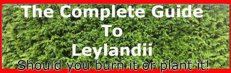 Leylandii guide, growing tips, propagation, plant hedge