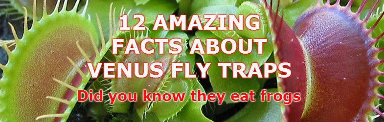 12 Amazing Venus fly trap facts