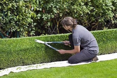 box hedging which is ideal for small hedging