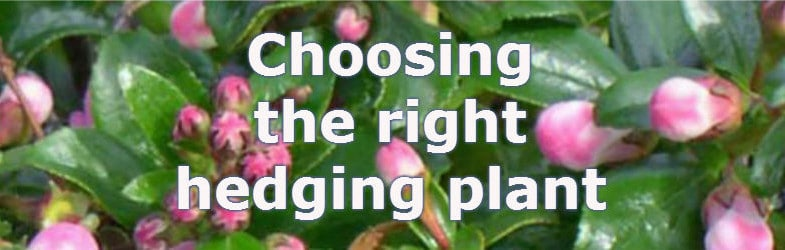 Types of hedges, choosing the best hedging plant