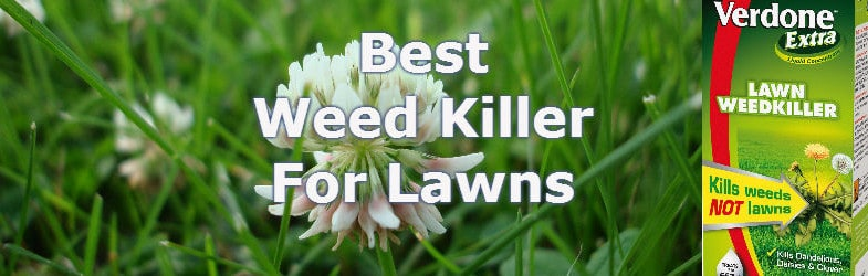 The Best Weed Killer For Lawns – For controlling broadleaf weeds