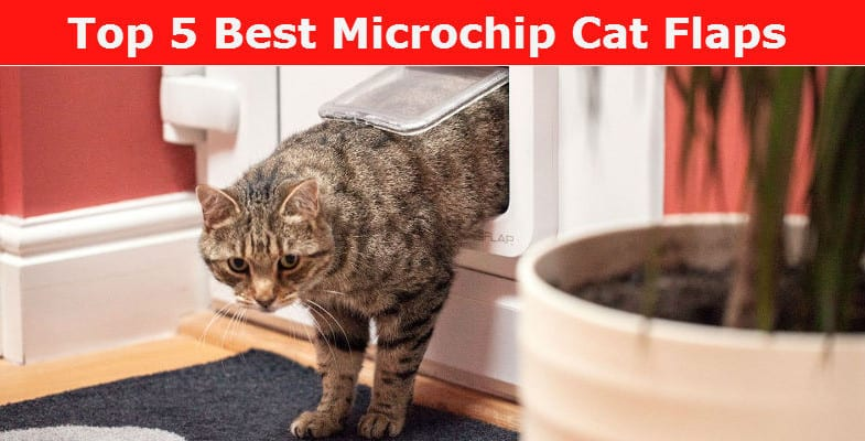 Best Microchip Cat Flap Reviews and Features Comparison
