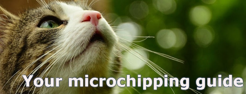 Everthing you need to know about microchipping your cat