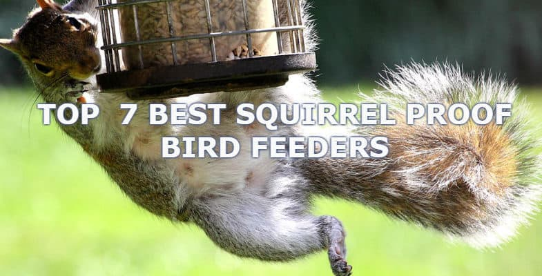 The Best Squirrel Proof Bird Feeders – Which do actually work! & 2020 Update
