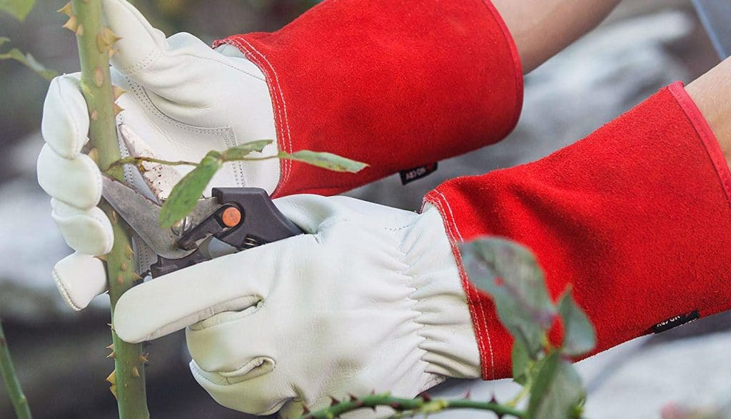Best gloves for roses and brambles - We compare 5 great pairs and what to look for before buying