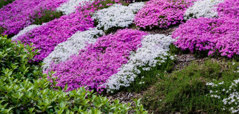 Top 10 Fast Growing Ground Cover Plants