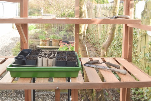 If you want to sow them indoors which is often more successful, this can be done in October or November which may also lead to earlier blooms, young plants can then be overwintered in a cold frame or greenhouse.