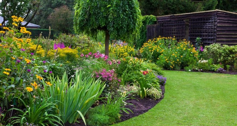 Top 10 Favourite Spring Flowering Shrubs With Pictures