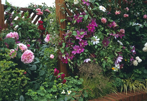 To make your garden more attractive you can capitalize upon climbing plants and flowering vines that not only produce dark foliage juxtaposed by beautifully coloured flowers but attract butterflies and bees to your garden.