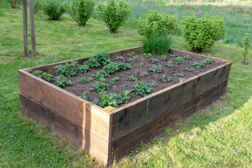 If you are planting in longer containers or raised container beds, for example, you can avoid digging individual holes for each plant and instead just dig a trench where you plan to place each of the strawberries. They're after you can place them into the ground in approximately 10 or 15cm apart.
