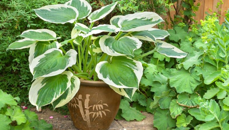 Top 10 Best Shade Loving Plants For Containers