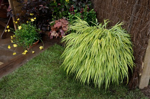 This Japanese forest grass takes on bright colours, rich in greens and highlighter yellows, sometimes even lime green tones. If you have moist, shaded areas in your garden, this is the ornamental grass for you.