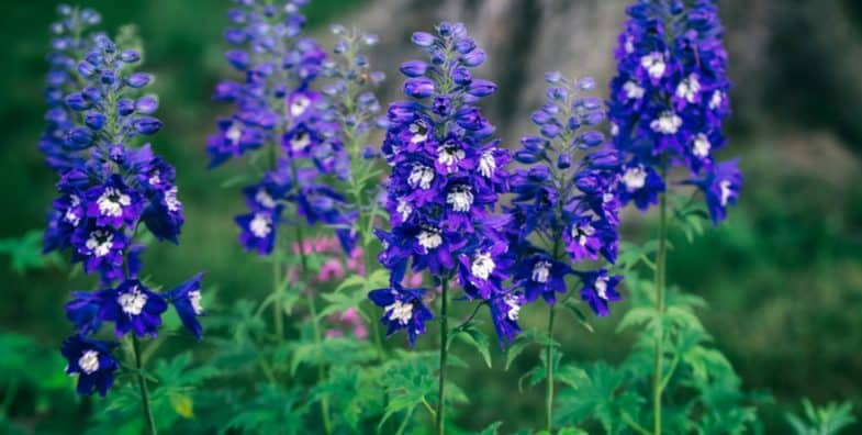 How to take basal cuttings from perennials