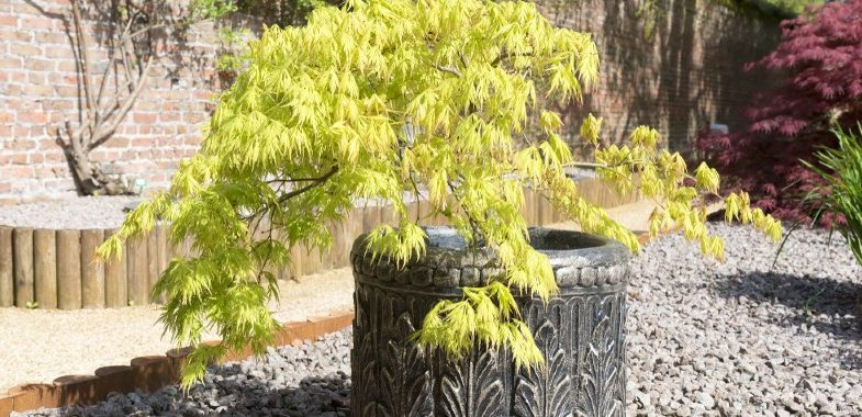 10 of our favourite small trees for containers and pots