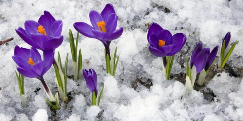 Top 7 Autumn and Winter Flowering Bulbs