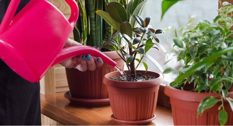 10 Best House Plants  – Low maintenance and easy to care for
