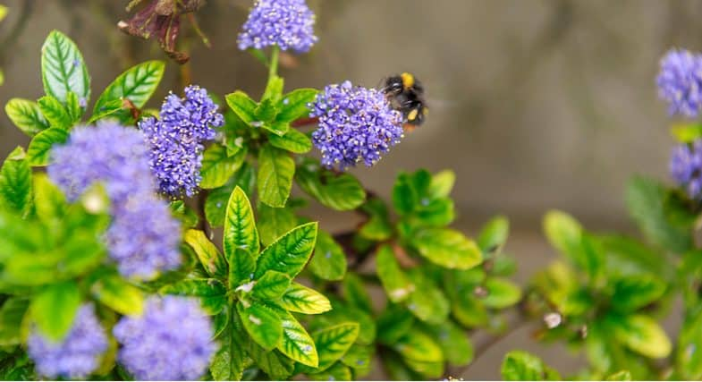 Top 10 Best plants for bees -to create a bee-friendly garden with these stunning plants