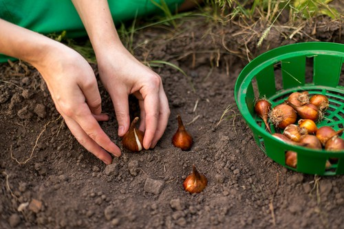 how deep to plant bulbs