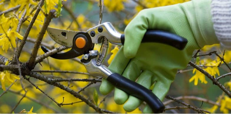 Pruning shrubs – when and how to prune different types