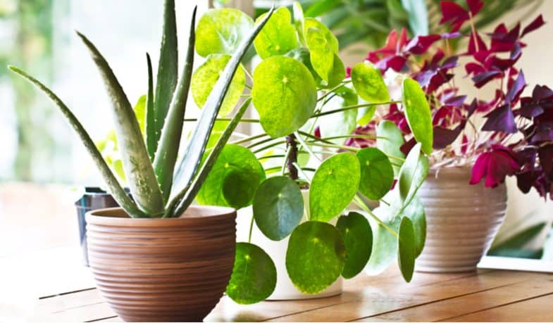 10 Small Indoor Plants For Small Rooms and Apartments