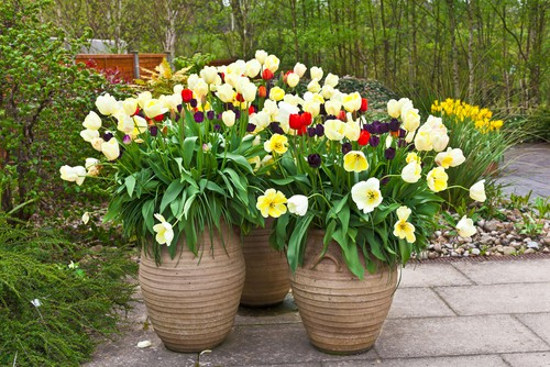 when to plant bulbs - Autumn