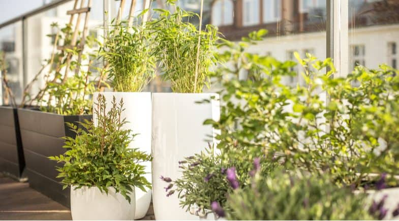 Some of the best types of plants for a balcony from strawberries and herbs to shrubs and bulbs
