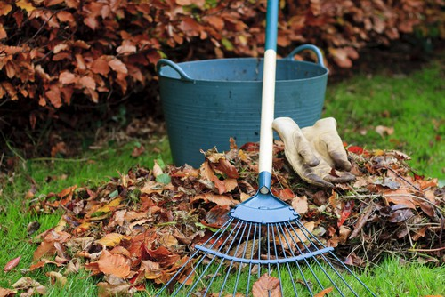 Make sure you clear away all the leaves before winter sets in. The best way to do this is to go over your lawn with your lawn mower.