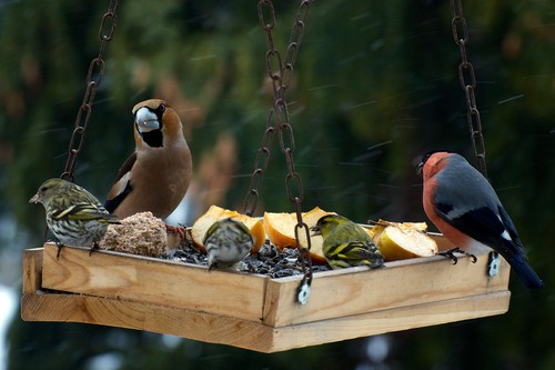 Give birds the right type of seed