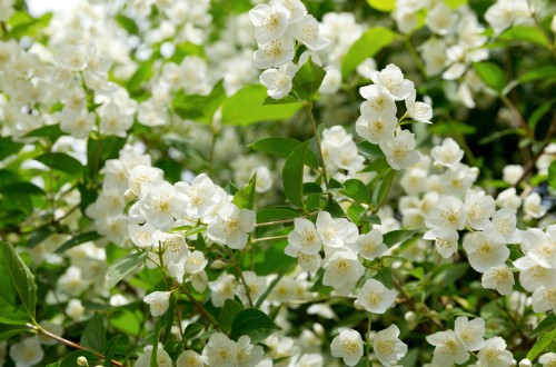 How to propagate Jasmine and pruning