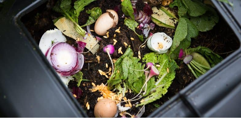 What to put in a compost bin and what not to compost