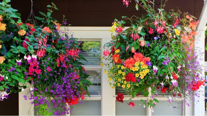 Best trailing plants for hanging baskets