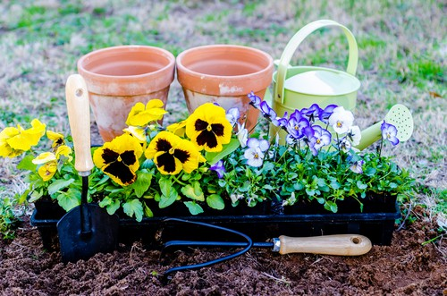 Start planting winter and autumn bedding in September
