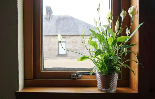 How to repot a peace lily. Just before becoming root bound, pot into a slightly larger pot with indoor compost and water. Don't feed for around 3 months.