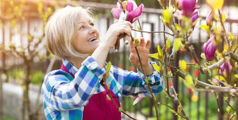 Pruning magnolias – How and when to prune magnolias