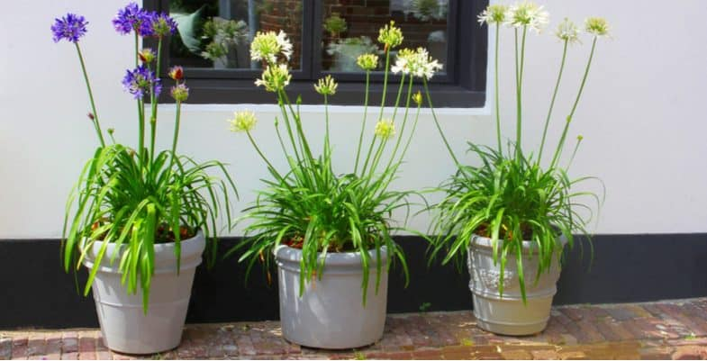 Top 10 hardy plants for pots for outdoors