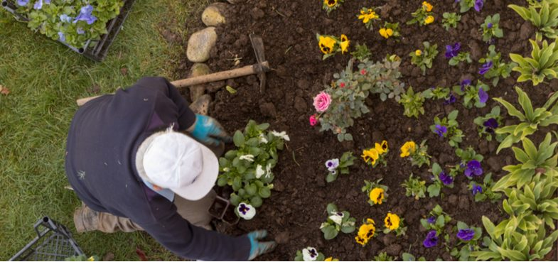 We look at some of the best autumn and winter bedding plants to brighten up your garden on a cold winters day