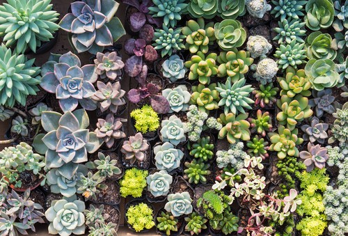 best succulents for containers