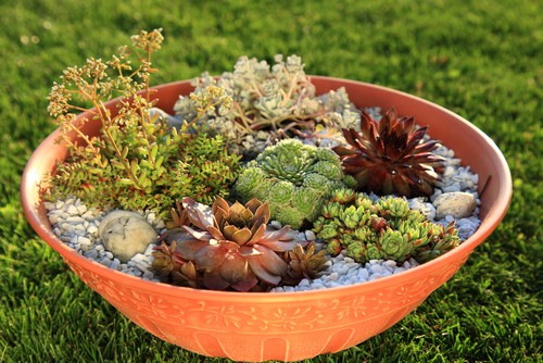 choosing containers for succulents. They prefer shallow containers