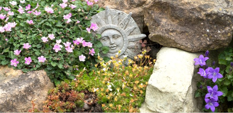 Growing and caring for alpine rockery plants successfully