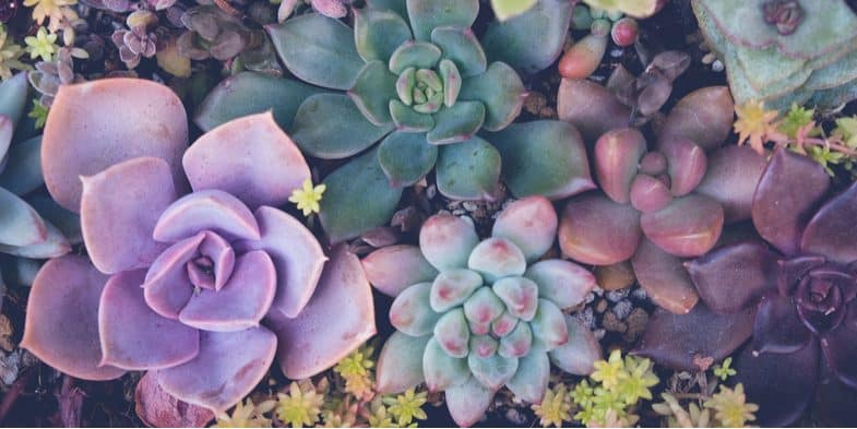 How to grow succulents – the beginner's guide