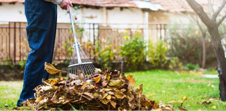 How to make leaf mould and what to use it for