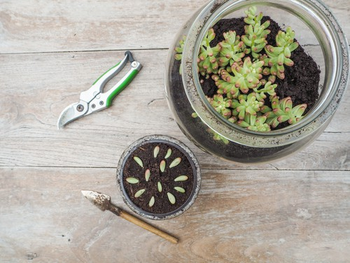 when to propagate succulents - the warmest time of year is best