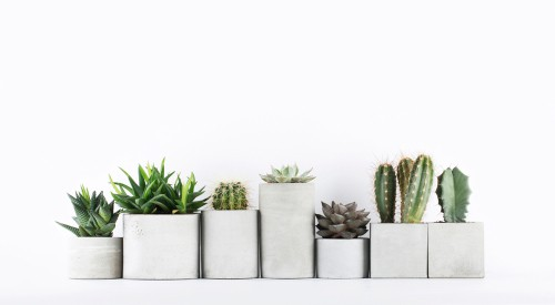 Choosing the right succulents