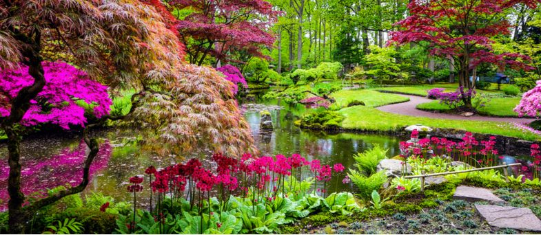 Best plants for creating a Japanese garden