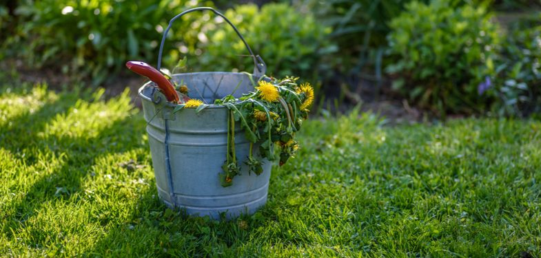 How to kill weeds permanently and prevent them in the first place