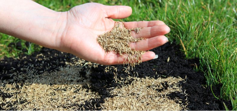 Best grass seed – Top 8 Picks from hard-wearing grass seed, fine grass seed and shade-tolerant seed
