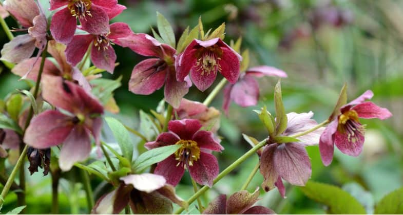 12 of the best perennials for shade