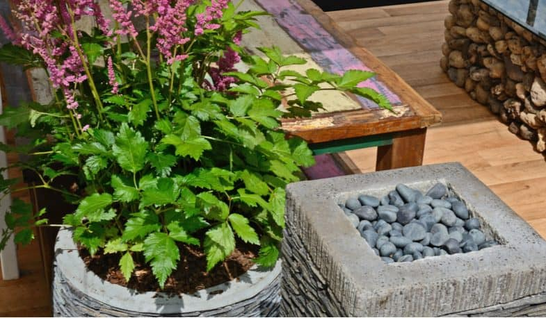 Growing astilbes in pots and containers – Planting and care guide