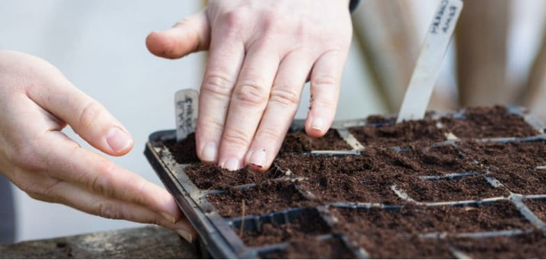 How to grow perennials from seed – step by step