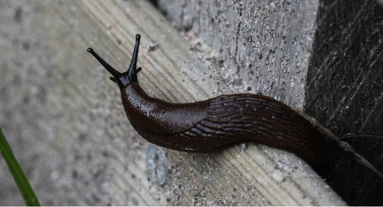 How to stop slugs coming into your house